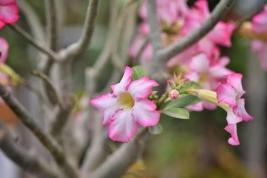 沙漠王子、乒乓菊、香水合欢、铁兰花.....这些新花扎堆亮相成