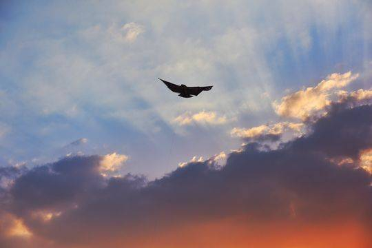 图集|夕阳西下晚霞满天 飞机在黄昏下飞行