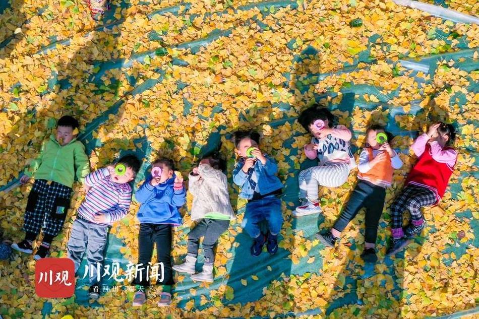 组图|澳门金沙官方游戏下载:落叶缤纷 童趣雀跃