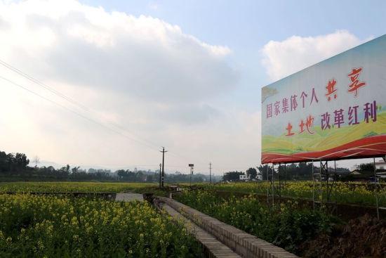 四川泸县油菜花开游人醉