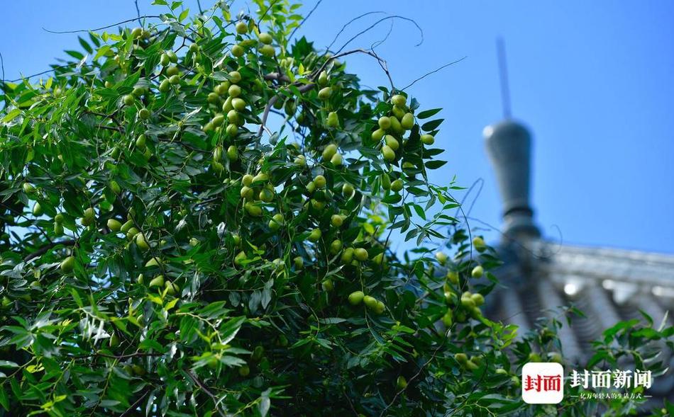 成都合江亭的水果飘香,你流口水了吗?