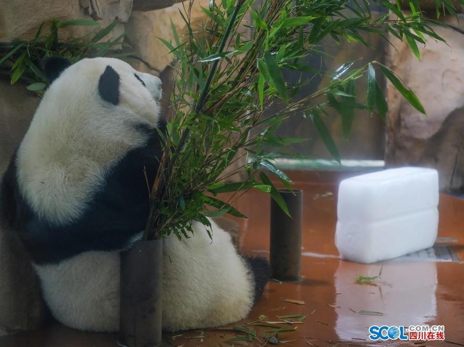 """成都动物园内大小动物""""花式""""防暑降温"""
