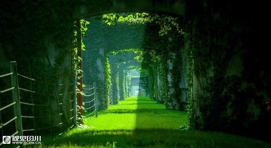 绿得让人窒息,美得让人惊叹,亮瞎了多少国人的眼睛图片