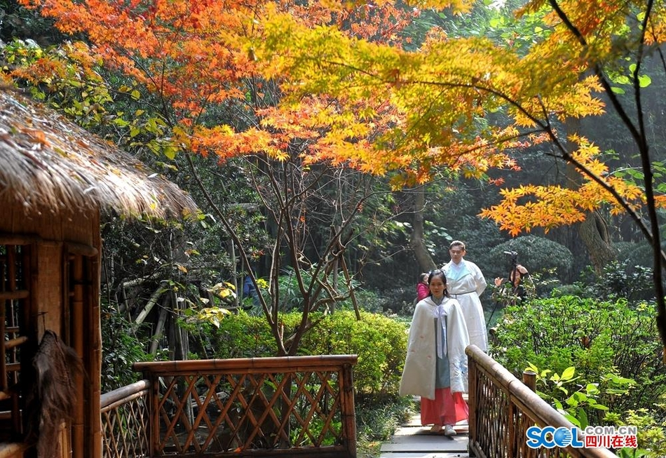 美!又到一年枫叶、银杏观赏季