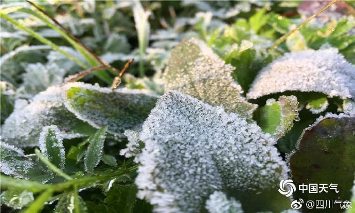 四川资阳:今冬首次霜冻