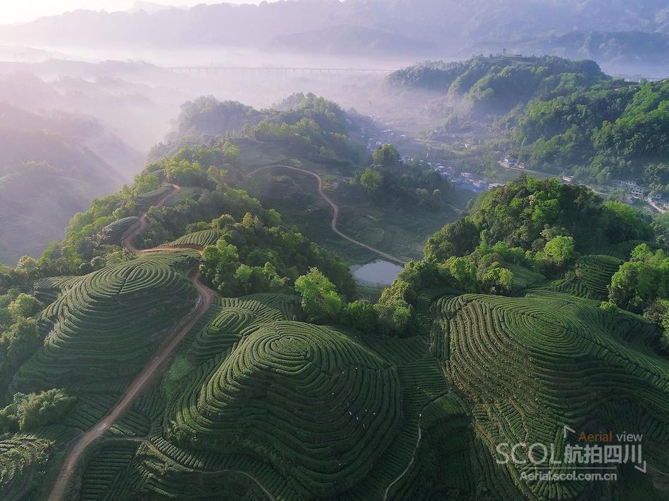 盛景奇观 瞰雅安名山区茶园大地的指纹