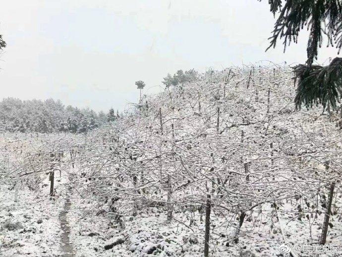 今日大雪 四川南充、广元、金堂降下今年冬天的第一场雪