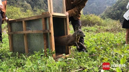 林麝向山 百鸟归林 成都森林公安破获特大捕鸟案