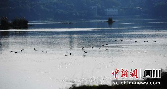 走进嘉陵江上最后的码头古镇--蓬安周子古镇