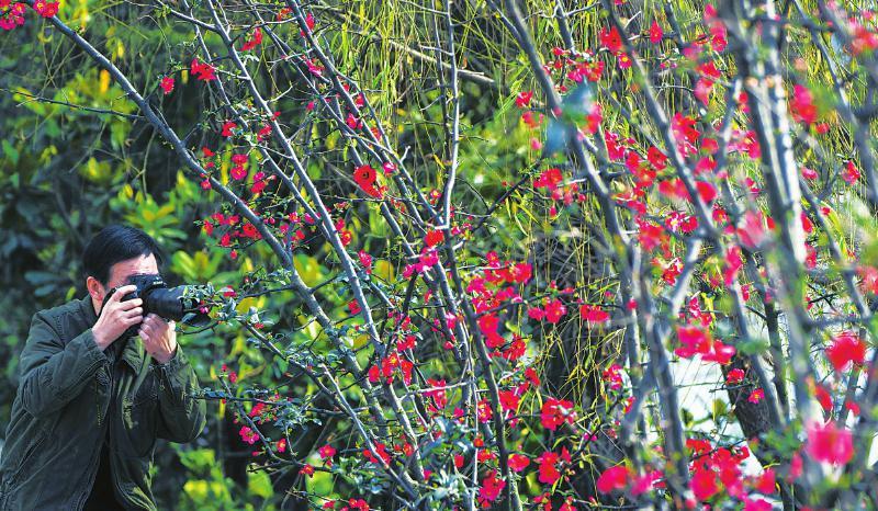 春已来 陌上赏花