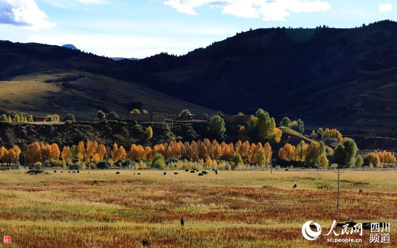 甘孜州理塘县:秋染藏乡 好个和谐美丽的童话世界