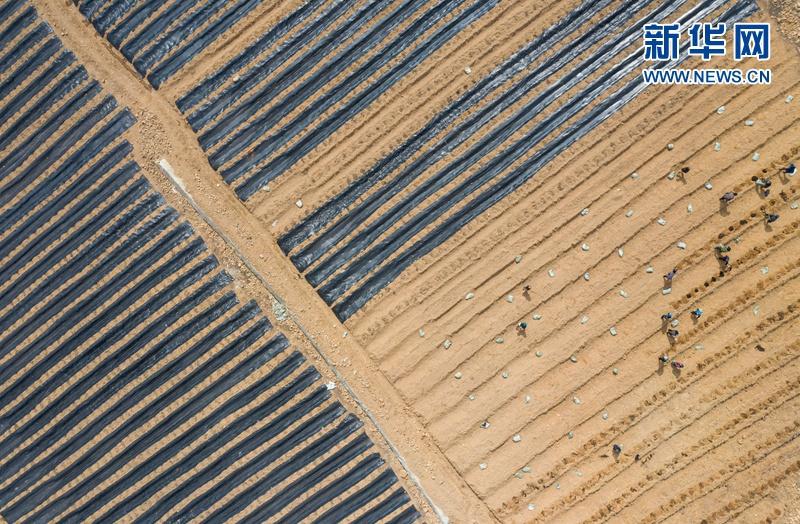 四川布拖:发展高原蓝莓产业 壮大村集体经济