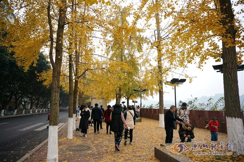 乐山街头银杏叶落满地金黄 正是拍照打卡时