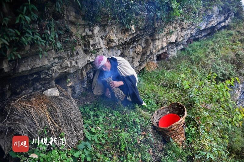 大凉山中悬崖采蜜人 在继承中发展