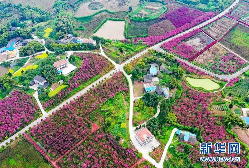 四川华蓥:锦绣田园 画里乡村