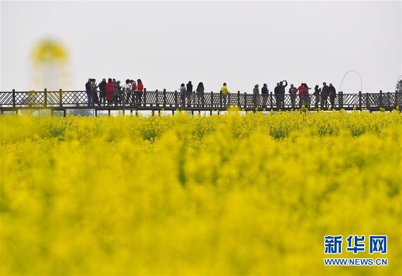 四川广汉:以花为媒发展乡村旅游