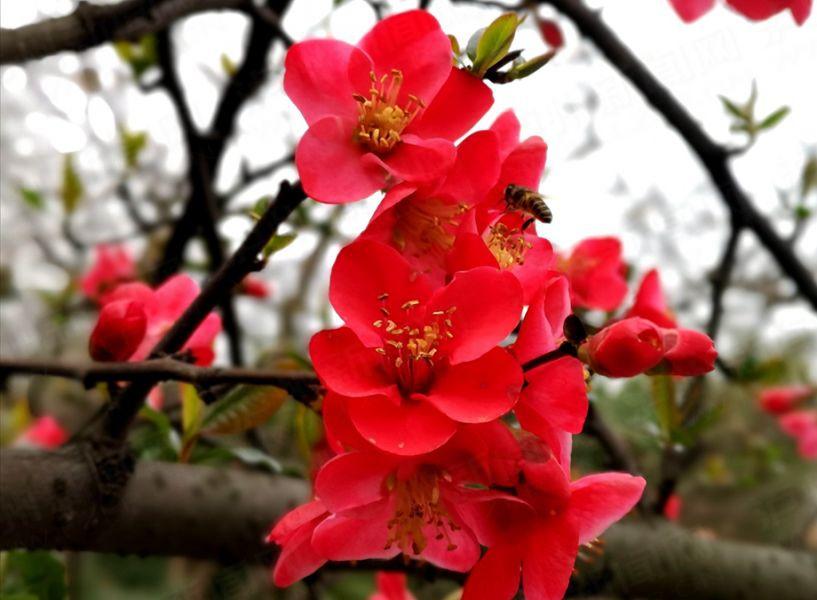 【高清】春暖花开扮靓酒城