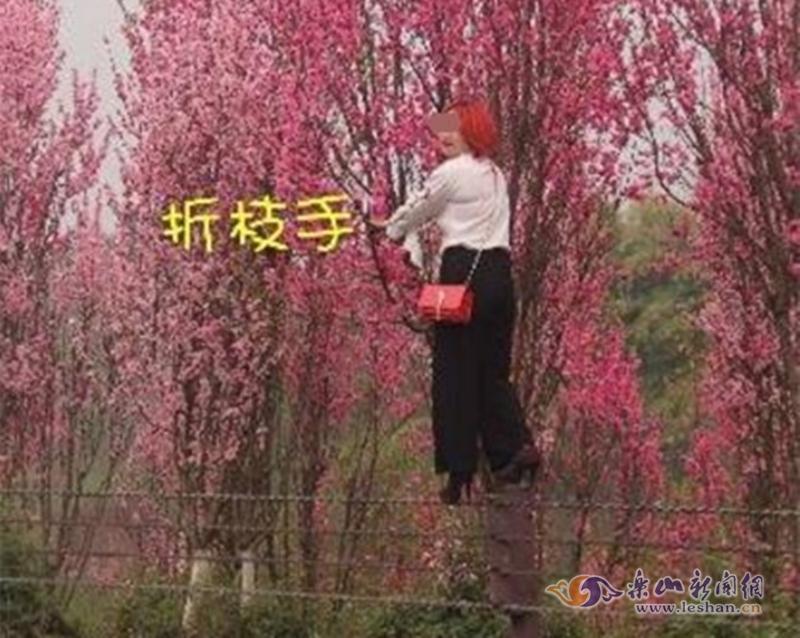 【文明你我他】绿心赏花 不文明行为煞风景