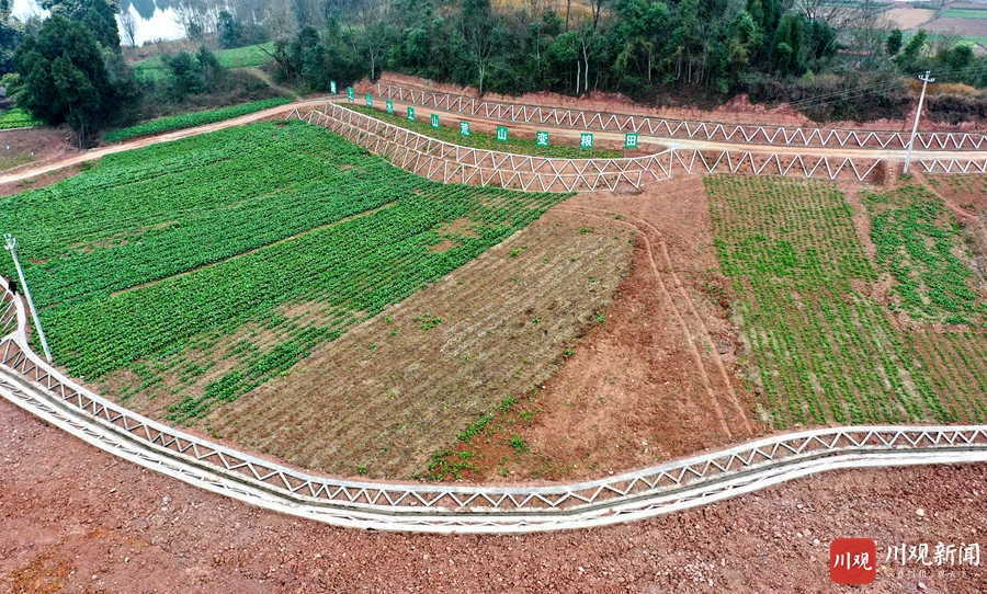 仁寿:冬闲时节 高标准农田建设忙