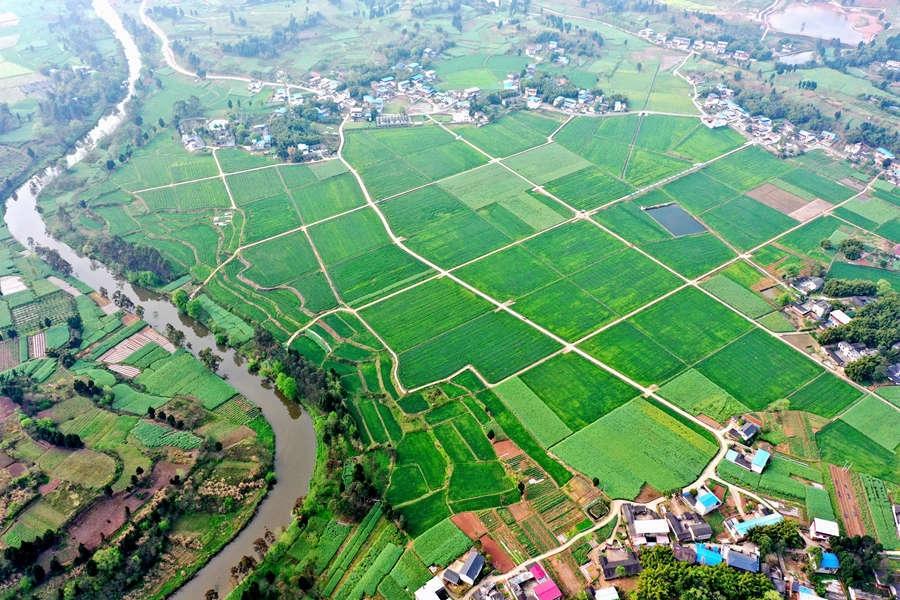 仁寿:高标准农田绘就绿色田园