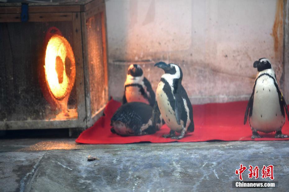成都动物园开启取暖设备帮助动物安全过冬