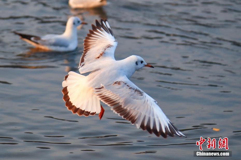 四川雅安候鸟云集 生态美如画