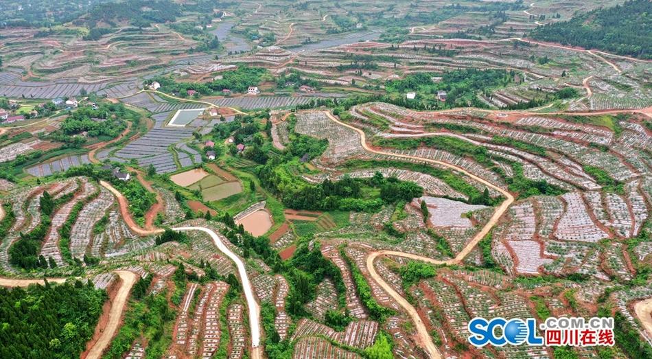 """南充嘉陵区:荒山荒坡连片发展 变成巨幅""""田园调色板"""""""