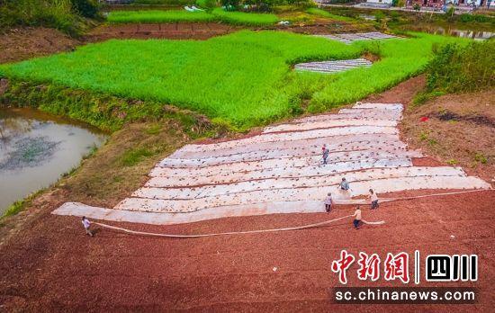 """自贡沿滩:""""春耕画布""""兆丰年"""