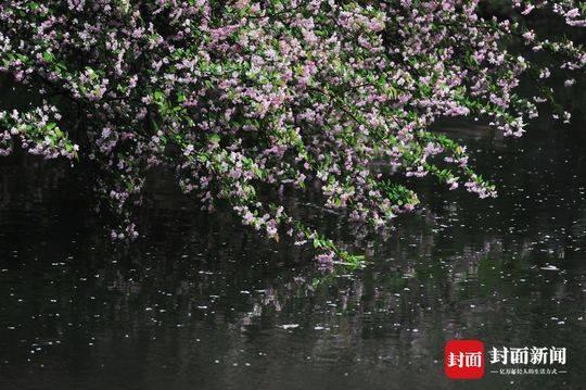 春分迎春雨 蓉城看花湿