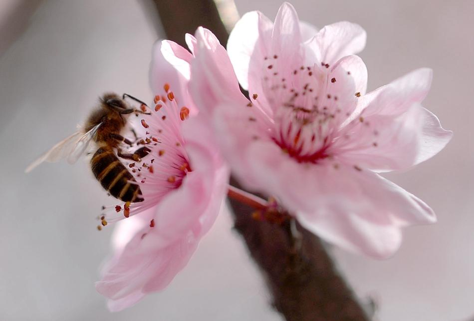 惊蛰时节 微距摄影观春之萌动