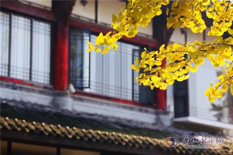 【图说】赏银杏美景 嘉定坊也有好地方