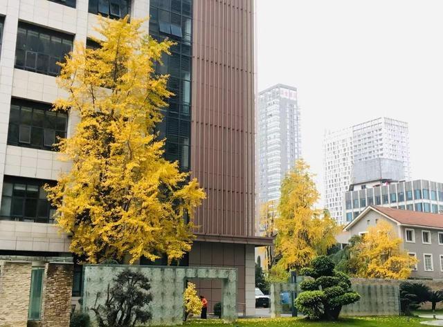 未来几天空气质量转差 成都15日零点启动重污染黄色预警