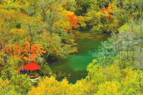 赏红叶、拍彩林、品秋果——这份赏秋攻略色香味俱全