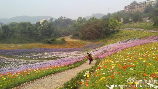 周末赏花去这里 2019四川第三十三期花卉观赏指数发布