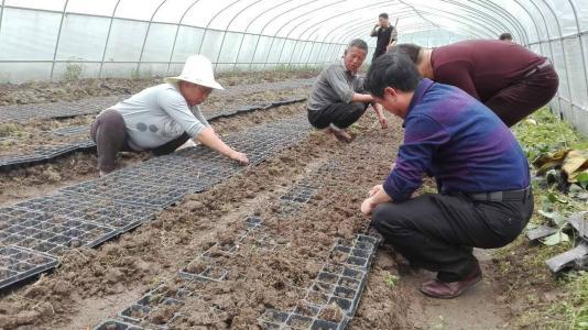 央媒看四川 | 川中贫困村里贫困户奋斗脱贫的故事