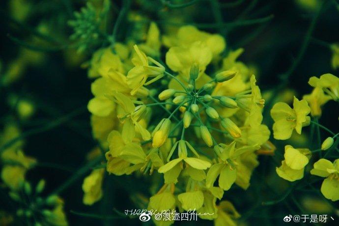 成都:花又开好了