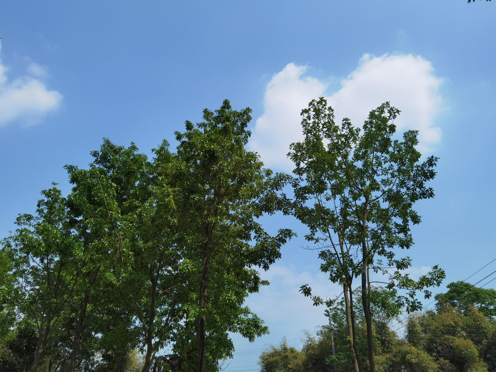 四川省级生态环保督察共受理群众举报2294件