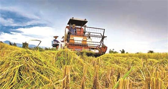 四川部署加快粮食产业经济发展 力争产值年均增长7%左右