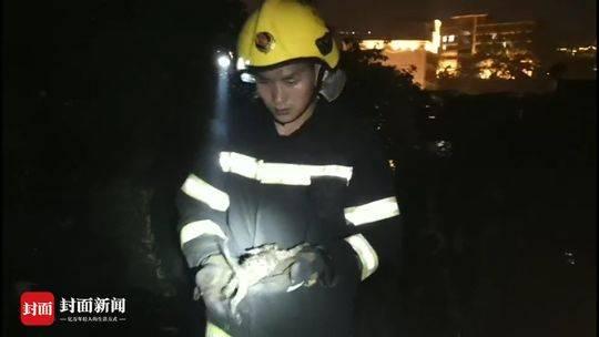 火场中被救出的小猫遭主人遗弃 内江消防官兵带走它