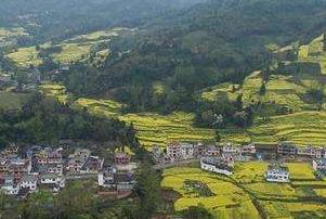 有专家认为:雅安是史料记载世界最早人工种茶地