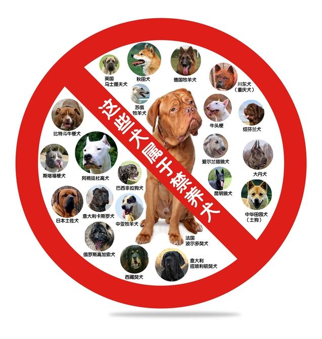 成都开展犬只集中整治 清理禁养犬养狗需办证捕捉流浪狗