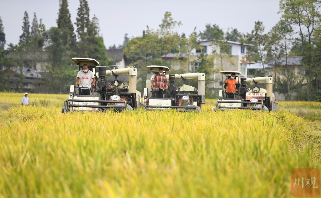 今年上半年 成都农村居民人均可支配收入同比增长13.2%