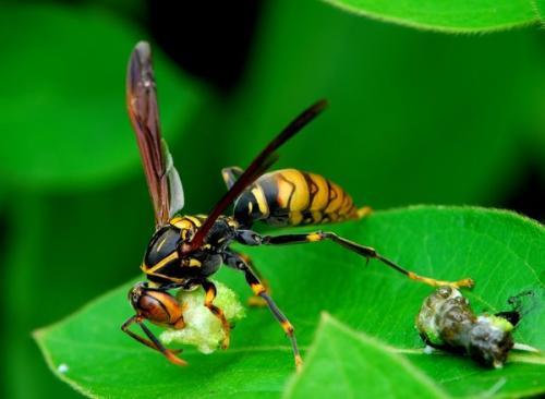 妻子被马蜂蛰伤死亡 丈夫一纸诉状将挖树惊扰马蜂的人告了