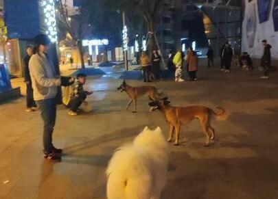 遛狗时犬只与车辆相撞 狗主人、车主被判互赔
