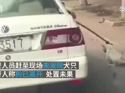 警方为开警车拖拽流浪狗致歉:缺乏处理流浪犬的专业技能
