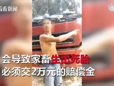 视频|蹊跷!汽车鸣笛致家畜难产?赔偿2万元才能走人