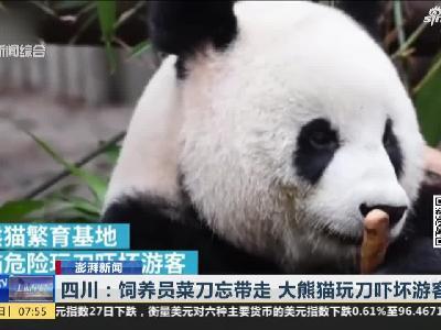 四川:饲养员菜刀忘带走 大熊猫玩刀吓坏游客