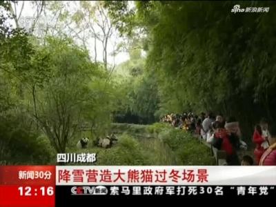 《新闻30分》四川成都:降雪营造大熊猫过冬场景