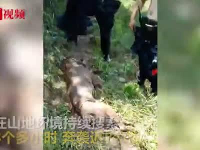 视频丨警犬完成任务后中暑 训导员脱衣扇风紧急抢救