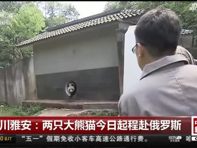 视频丨四川雅安:两只大熊猫今日起程赴俄罗斯